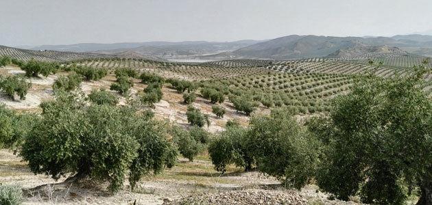 Dosis de siembra y abonado de cubiertas vegetales en olivar