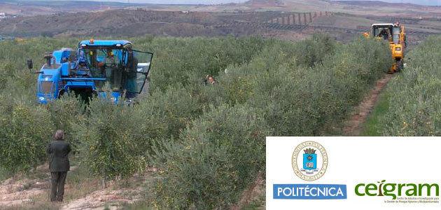 El V Curso de Olivicultura profundizará en la fisiología y en las prácticas culturales del cultivo