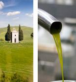Olive Oil Sommelier Course, una actividad formativa para catadores y amantes del AOVE en la Toscana