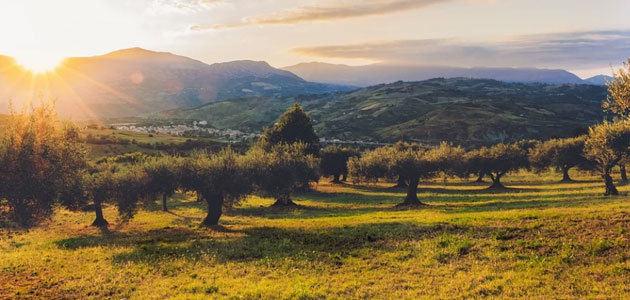 """Últimas plazas disponibles para el curso """"La innovación en el ámbito de la olivicultura internacional como estrategia competitiva"""