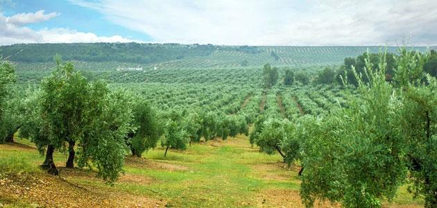 La XIV edición del Máster en Olivicultura y Elaiotecnia comenzará en septiembre