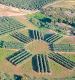 La UPM inaugurará su IV Curso de Olivicultura el próximo 16 de septiembre