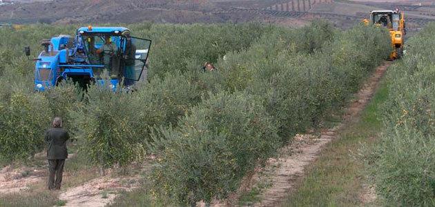 La UPM organiza la sexta edición de su Curso de Experto en Olivicultura
