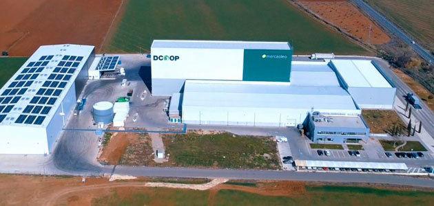El Grupo Dcoop logra un récord mensual de aceite de oliva envasado en marzo