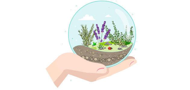 DiseñEN: nueva herramienta para el control biológico por conservación en el campo