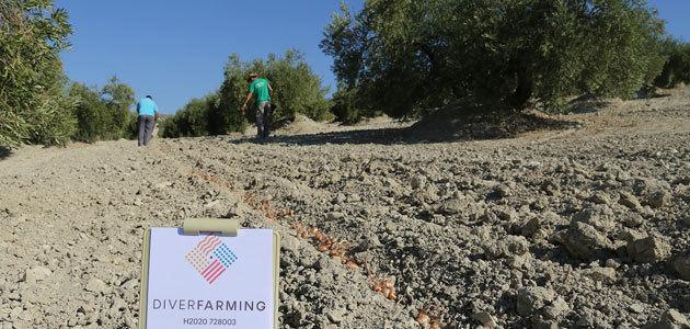 El equipo español de Diverfarming evalúa los primeros resultados de la diversificación de cultivos