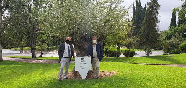 La DOP Baena planta un olivo centenario en el Parador de la Arruzafa de Córdoba