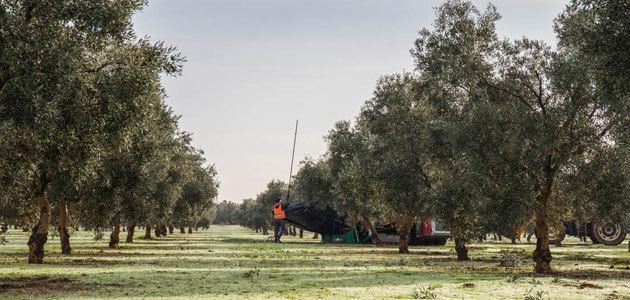 La DOP Estepa espera duplicar el uso de cubiertas vegetales en los próximos cinco años