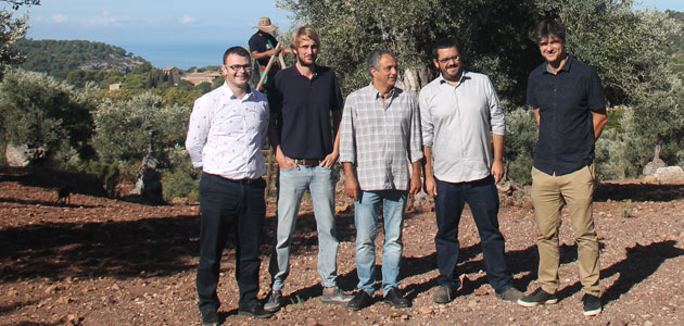 La DOP Oliva de Mallorca prevé una producción de cerca de 100 t., la mayor desde su nacimiento