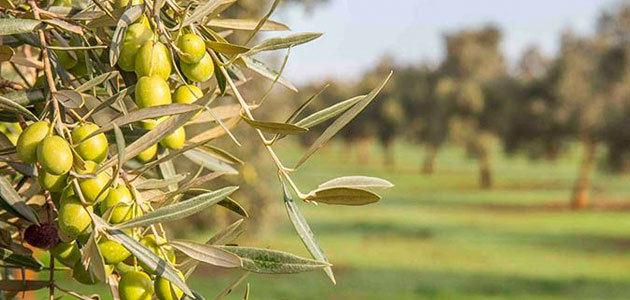 La DOP Estepa prevé recuperar la producción media del territorio