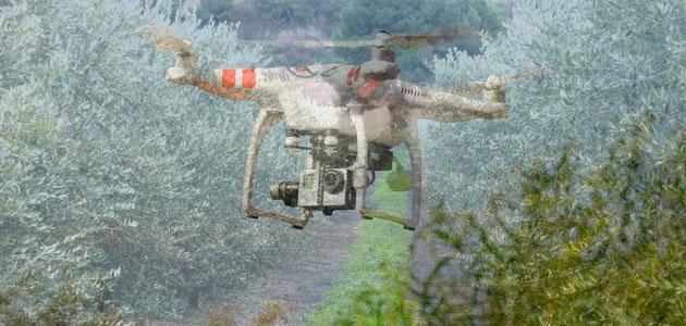 Nuevos desafíos tecnológicos al servicio de la olivicultura