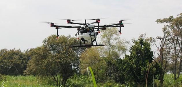 Cómo hacer la olivicultura más eficiente con el uso de drones