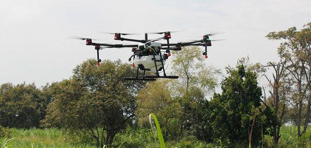 El uso de drones permite anticipar el estado fisiológico y las necesidades nutricionales del olivar