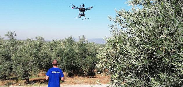 Acercar la más moderna tecnología a la olivicultura a través del uso de drones