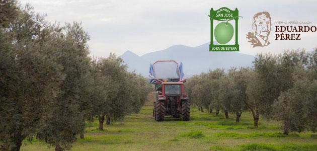 Convocado el Premio de Investigación oleícola 'Eduardo Pérez'