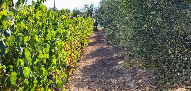 La ENAC lanza un nuevo programa de acreditación para ensayos en aceites de oliva