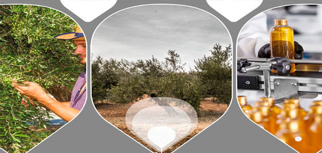 Avance del programa del II Encuentro de Olivicultores del Grupo Oleícola Jaén