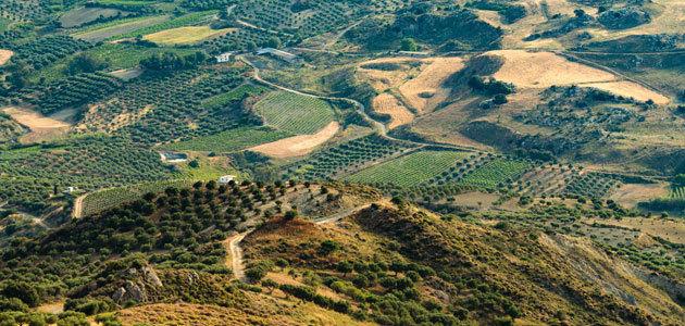 Tres de cada cuatro europeos conocen la PAC y el 56% quiere que se incrementen las ayudas a los agricultores