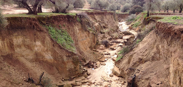 Desarrollan un método para la monitorización de la erosión del suelo del olivar