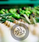 Nuevos cursos de verano sobre olivicultura y gestión en la producción y elaboración de AOVE