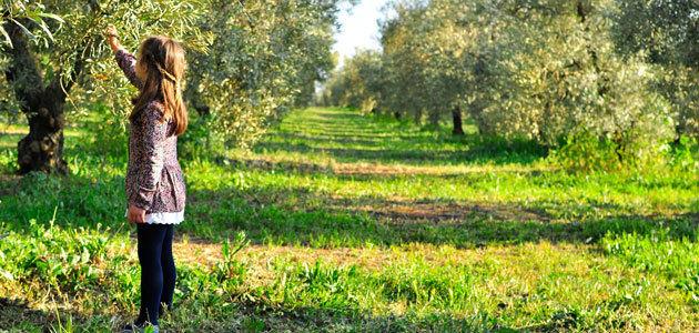El Olivar, un nuevo programa educativo para impulsar la cultura oleícola