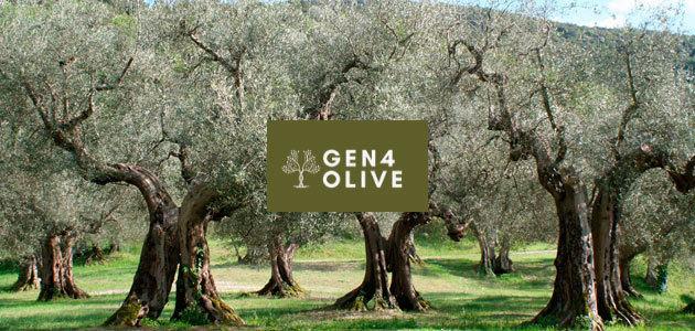 Abierta la convocatoria de GEN4OLIVE para proyectos que contribuyan a la mejora genética del olivo