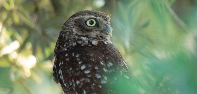 Nace la primera guía de aves de una finca de olivar
