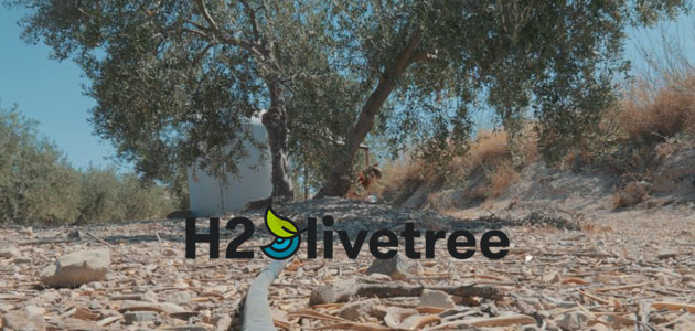 H2Olivetree: cuando un residuo puede convertirse en un recurso