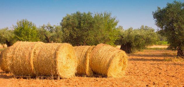 La persistencia de los pesticidas amenaza los suelos europeos