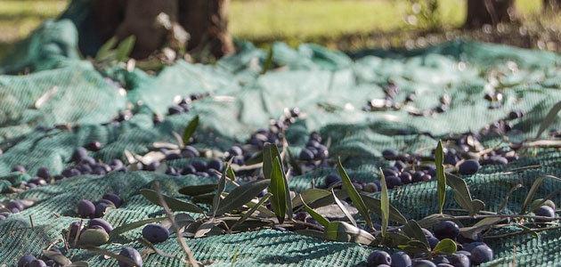 ALPEOCEL, un proyecto para mejorar la gestión de subproductos del aceite de oliva