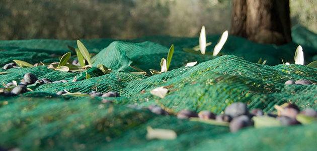 Obtienen compuestos con aplicaciones farmacológicas de un residuo de las almazaras