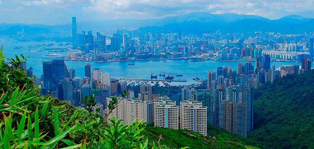 La producción mundial de aceite de oliva podría absorber las emisiones de CO2 de una ciudad como Hong Kong
