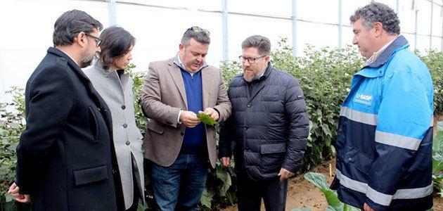 La Junta de Andalucía y BASF impulsan la protección de cultivos e investigación del hongo del olivar