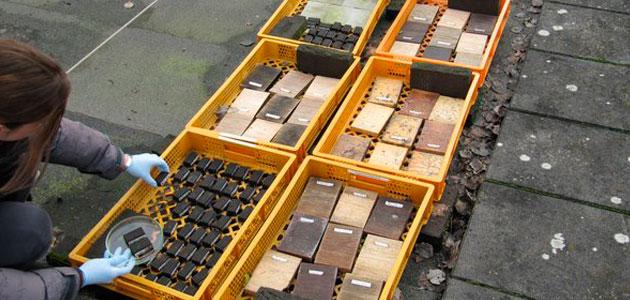 Aceite de oliva y hongos para proteger la madera