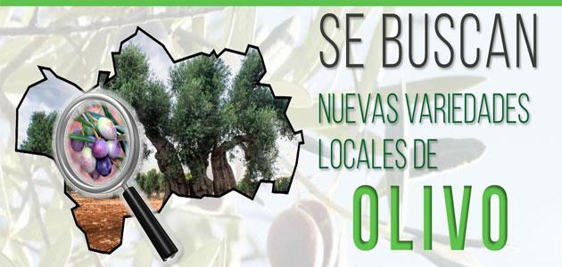 Nueva campaña para hallar nuevas variedades locales de olivo no identificadas