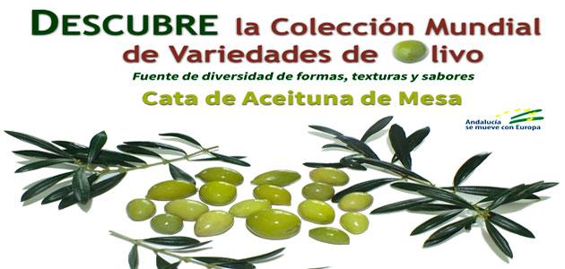 Un homenaje a la aceituna de mesa de variedades de la Colección Mundial de Variedades del Olivo
