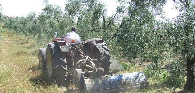 El Ifapa y Cortijo el Puerto se unen para investigar cultivos ecológicos del olivar