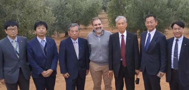 Representantes del Gobierno de Japón conocen la investigación sobre olivar del Ifapa