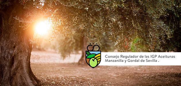 Balance de las IGPs de las Aceitunas Manzanilla y Gordal de Sevilla: más de 30.000 ha., 3.500 olivareros y 16 industrias