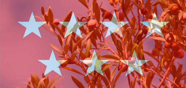 El Imidra desarrolla proyectos de investigación para mejorar el cultivo del olivar madrileño