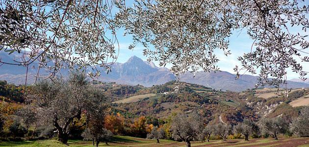 Presentan en Italia la secuenciación completa del genoma del olivo de la variedad leccino