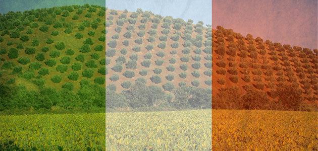 Menos de 20 de las grandes empresas italianas del sector del aceite de oliva son rentables