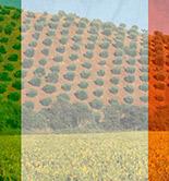 Productores e industriales italianos, unidos por el lanzamiento de un Plan Olivícola Nacional