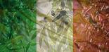 Italia prevé que su producción de aceite de oliva se reduzca un 38% en la campaña 2018/19