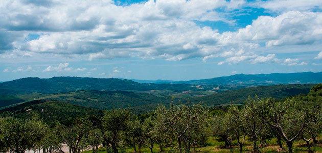 La producción europea de aceite de oliva se sitúa en 104.342 toneladas en octubre