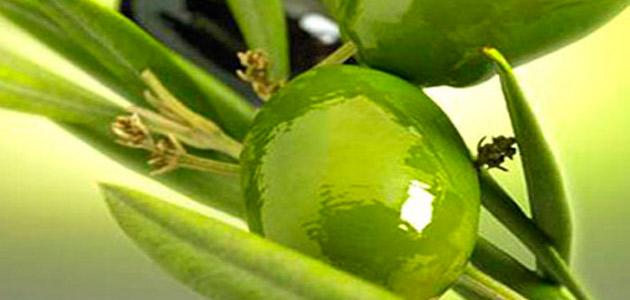 Ismea y Unaprol reducen la previsión de producción de aceite de oliva en Italia hasta 243.000 t.
