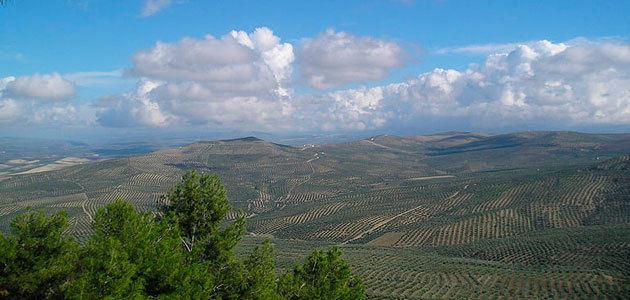 La Diputación de Jaén destinará 150.000 euros en ayudas a pymes agroalimentarias