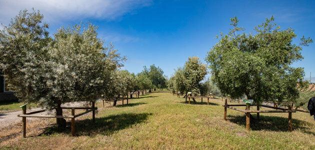 El Jardín de Variedades del Olivar: un nuevo espacio en la Vía Verde del Aceite