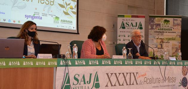Asaja-Sevilla prevé que la cosecha nacional de aceituna de mesa no supere las 489.000 toneladas