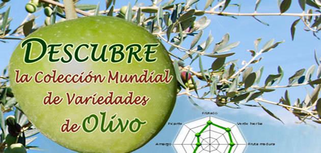 El Ifapa organiza una jornada de cata de aceites de la colección mundial de variedades del olivo